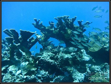 Agus Aldalur - Corales