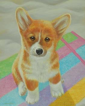 Corgi Puppy by Bonnie Golden