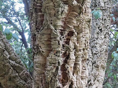 Rick Todaro - Cork Tree Close Up
