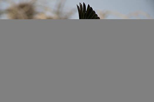Cormorants Return by Stephen  Johnson