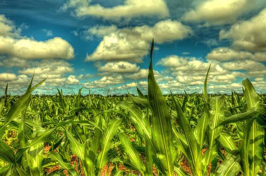 Corn field close up by  Caleb McGinn