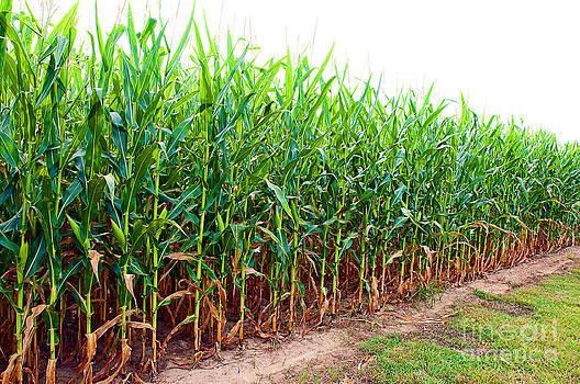 Danny Hooks - Corn Field in Alabama