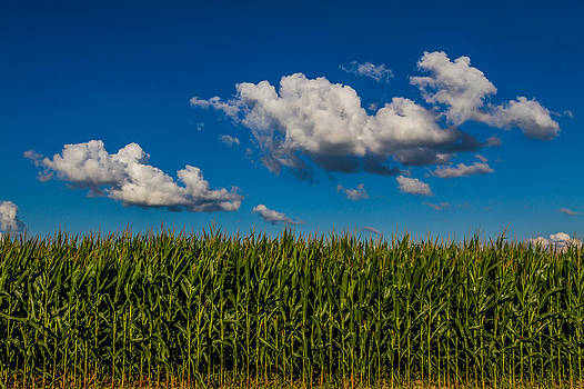 Ron Pate - Corn Field