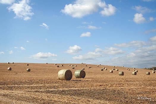 Corn Stalk Bales by Andrea Kelley