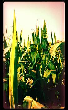 Corn Stalk by Ted Mahy