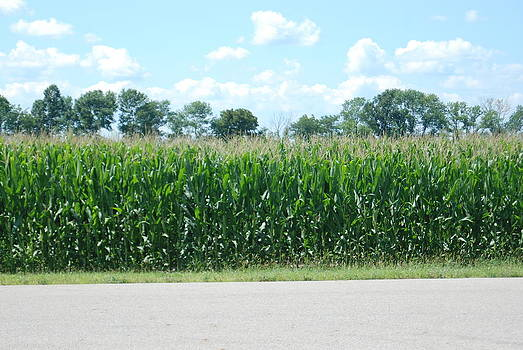 Corn  by William  James