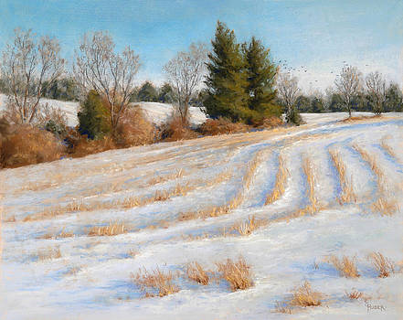 Cornfield Curves by Gary Huber