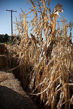 Cornfields by Elizabeth Richardson