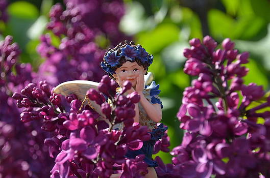 Cornflower Fairy Hiding in the Lilacs Woodland Fairires by Linda Rae Cuthbertson