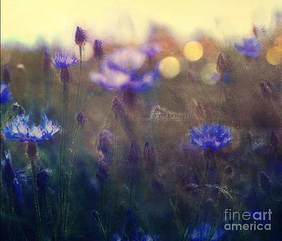 Cornflowers by Monika Pachecka