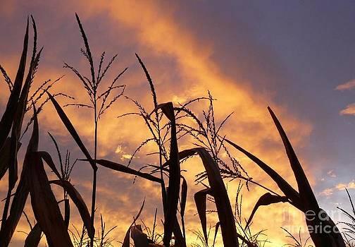 Corny Sunrise by Susan Olga Linville
