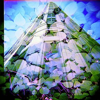 Corporate Beanstalk by Sara Snyder
