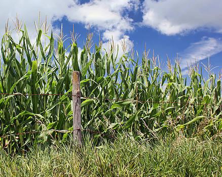 Nikolyn McDonald - Corralled Corn