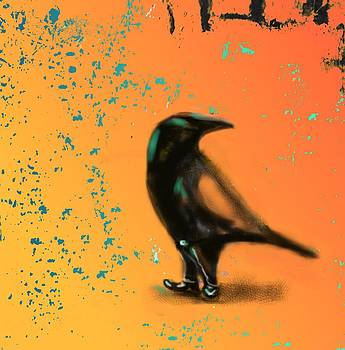 Marcello Cicchini - Corvus Looking Back