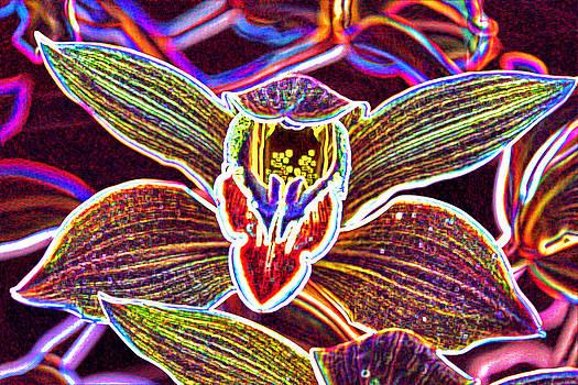 Cosmic Flower by Robbie Clayton