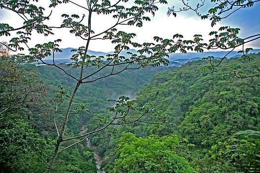Peggy Collins - Costa Rica River and Jungle