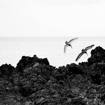 Costarica-fineart-23 by Javier Ferrando
