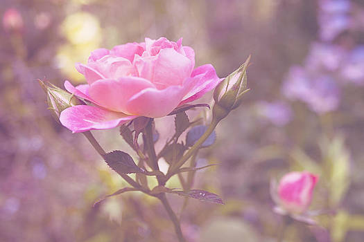 Cottage Chic in Pink by Bamalam  Photography
