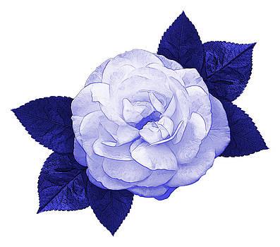 Jane McIlroy - Cottage Rose
