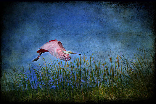 Cotton Candy by Eagle  Finegan