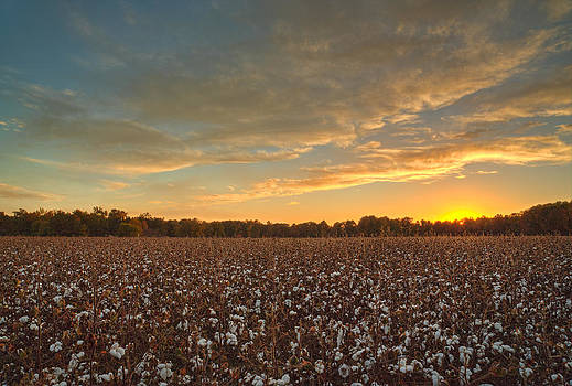 Cotton Candy by Greg Mills