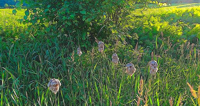 Cotton Monkey Heads by Peter Jackson