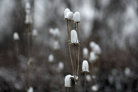 Gothicrow Images - Snowy Cotton Tops
