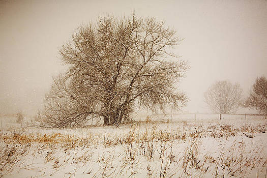 Marilyn Hunt - Cottonwood and Snow