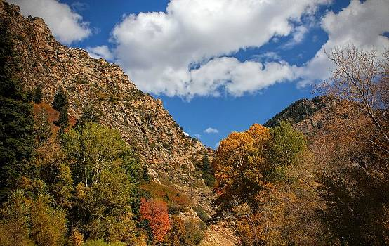 Cottonwood Canyon Autumn in Utah by Tracie Kaska