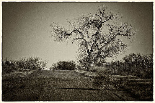 Cottonwood by Jeanne Hoadley