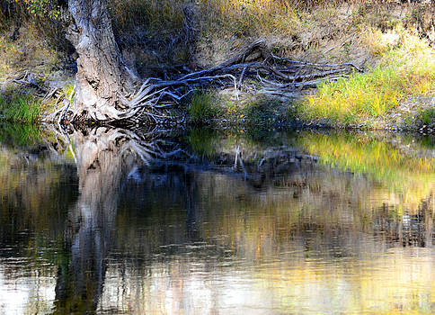 Cottonwood Reflections by J Foster Fanning