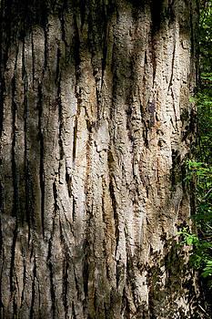 Mary Lee Dereske - Cottonwood Trunk with Summer Sun