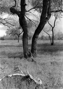 Randall Thomas Stone - Cottonwoods in Black and White