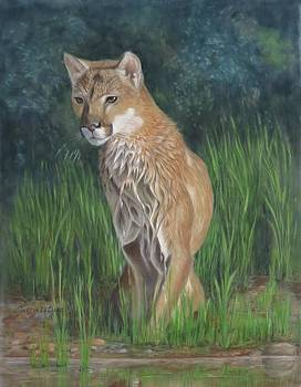 Cougar After the Swim by Teresa LeClerc