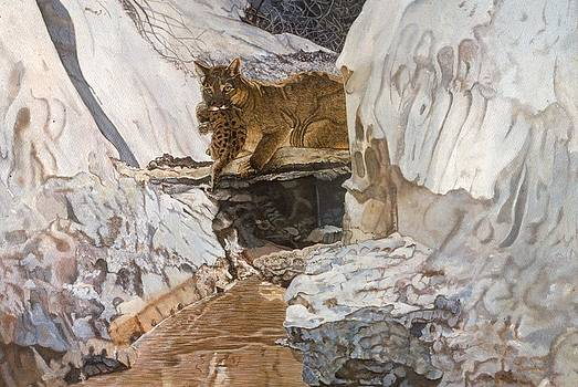 Cougar and Cub by Shara  Wright