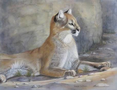 Cougar by Teresa LeClerc