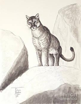 Art By - Ti   Tolpo Bader - Cougar