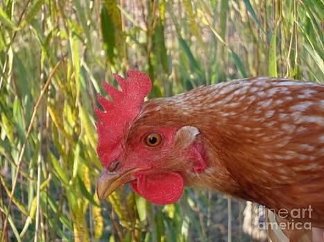 Country Chicken by Stacy Frett