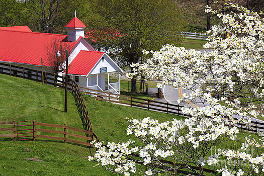 Jill Lang - Country Church with Dogwood Blooms