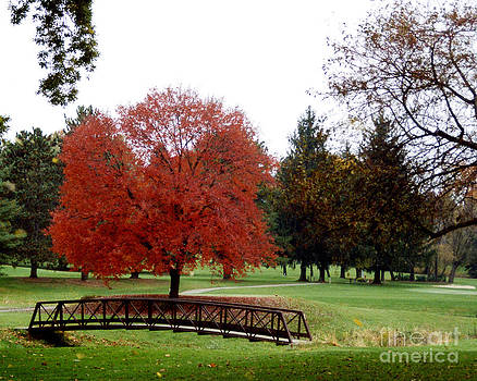 Country Club at Fall by Robert  Suggs