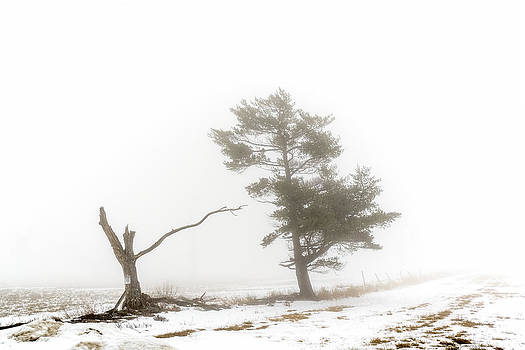 Country Fog by Ray Summers Photography