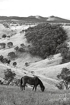 Country Hills by David Benson