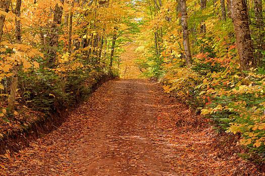 Matt Dobson - Country Lane in Autumn