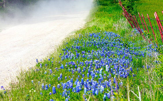 Country Road Bluebonnet Patch by Lorri Crossno