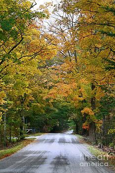 Deborah Benoit - Country Road Fall Vermont