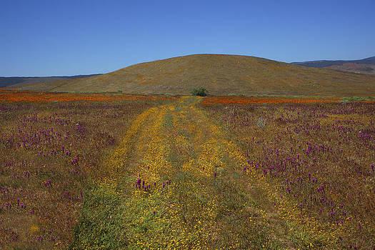 Susan Rovira - Country Road