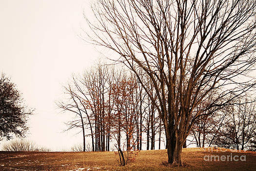 Country Trees by Brin Schooley