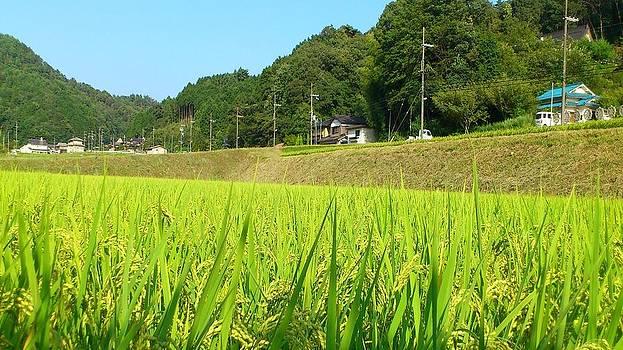 Countryside of Japan by Yoshikazu Yamaguchi