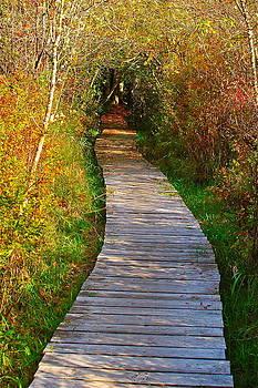 Covered Trail by Mark Lemon