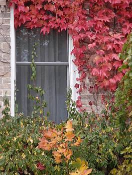 Covered Window by Margaret McDermott